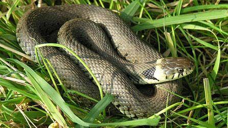 Рибар се прибра със змия в раницата