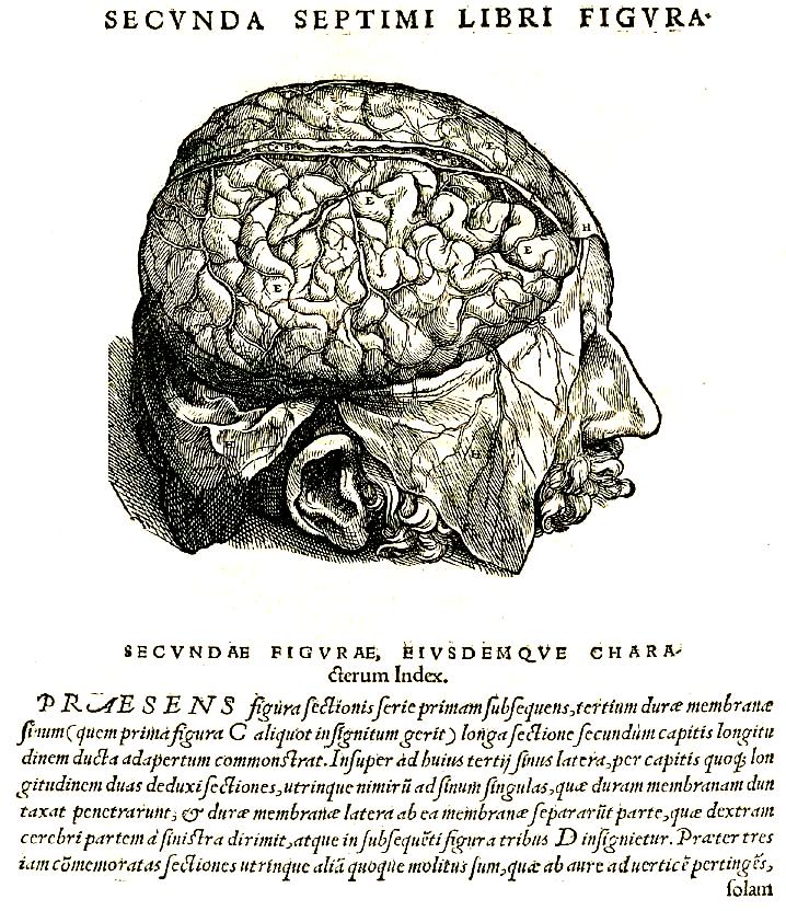 Libro \'De humani corporis fabrica\' de Andres Vesalio 1543 - Ciencia ...