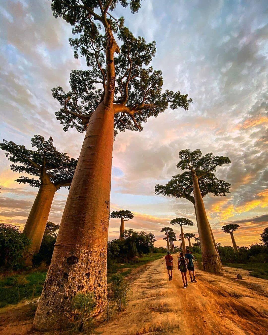 Baobab Nature Photography Africa Travel Africa Road Wildlife Photo Africa Nature Sunset Nature Instagram Nature Photo