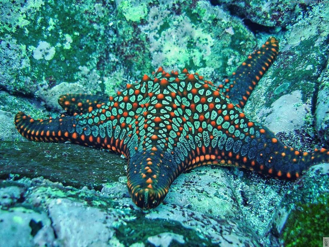 Ocean starfish underwater 1100x826 | Shells, Urchins, and ...