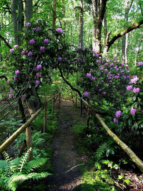 bluepueblo: Rhododendron Path, Zwickau, Germany photo via mystic ...