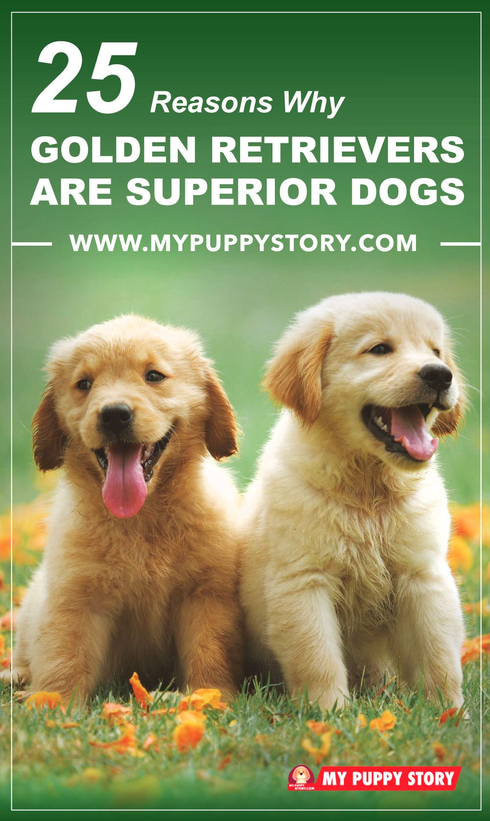 25 Reasons Why Golden Retrievers Are Superior Dogs Pet Insurance