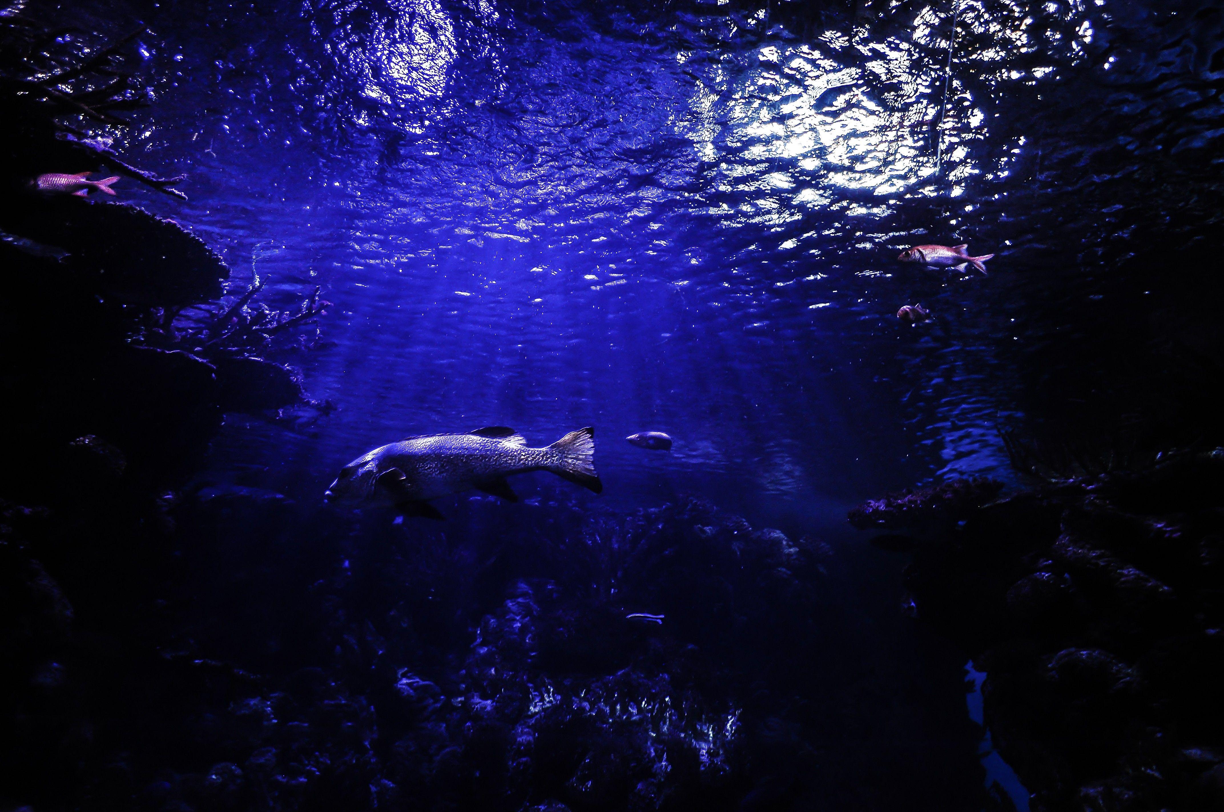 scuba diver aquarium wallpaper download free hd quality | hd