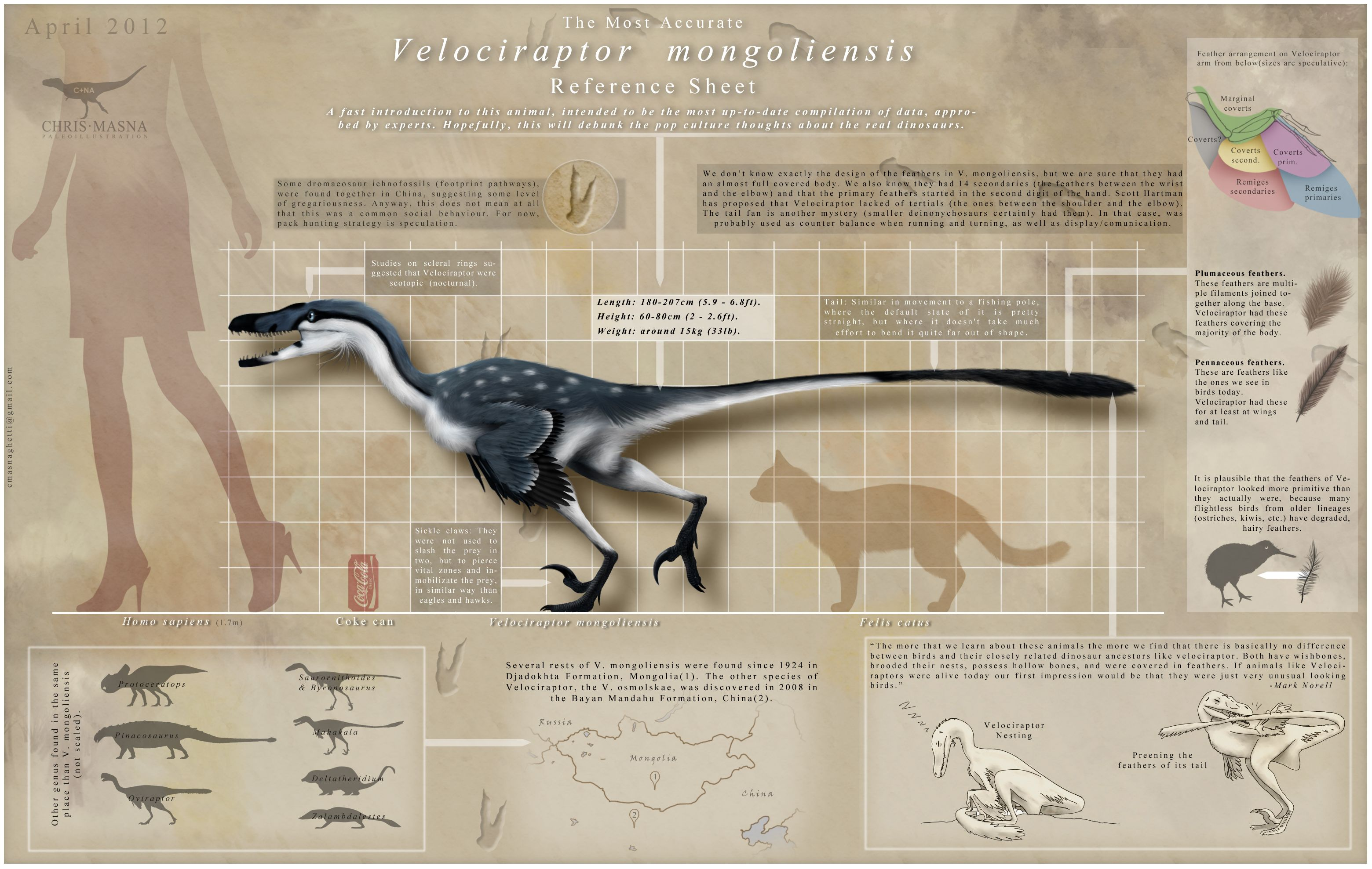 Velociraptor Infographic by =ChrisMasna on deviantART ...