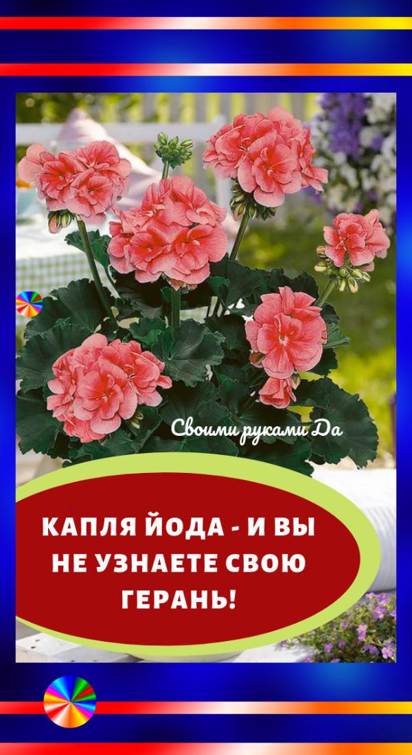 Комнатные домашние цветы: правильный уход своими руками ...