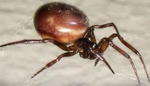 pająki zdjecia - Szukaj w Google