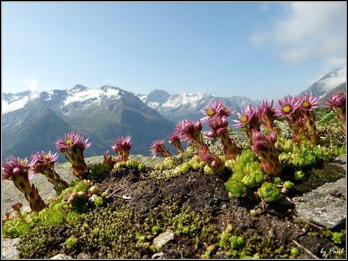 Österreich Tirol Finkenberg