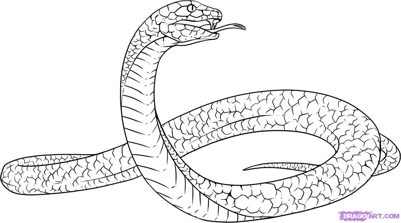 Line Drawing Snake : How to draw a snake drawing study pinterest