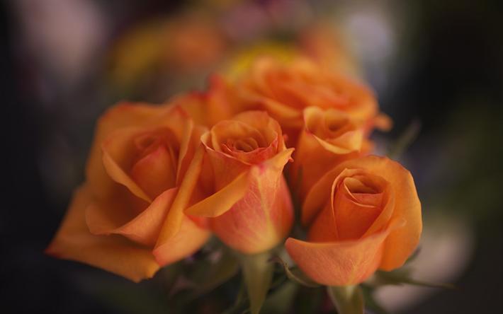 Lataa kuva oranssi ruusut, silmut, lähikuva, ruusut, bokeh, kimppu kukkia
