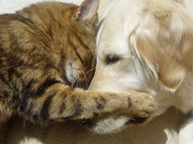 20 Cats And Dogs Hugging It Out Dog Friends Dog Cat Cute Animals