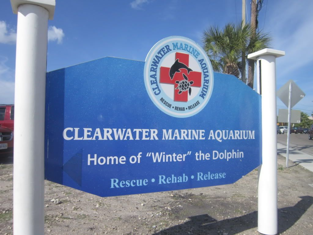 Clearwater marine aquarium ! Great experience , we all loved it :) -sb