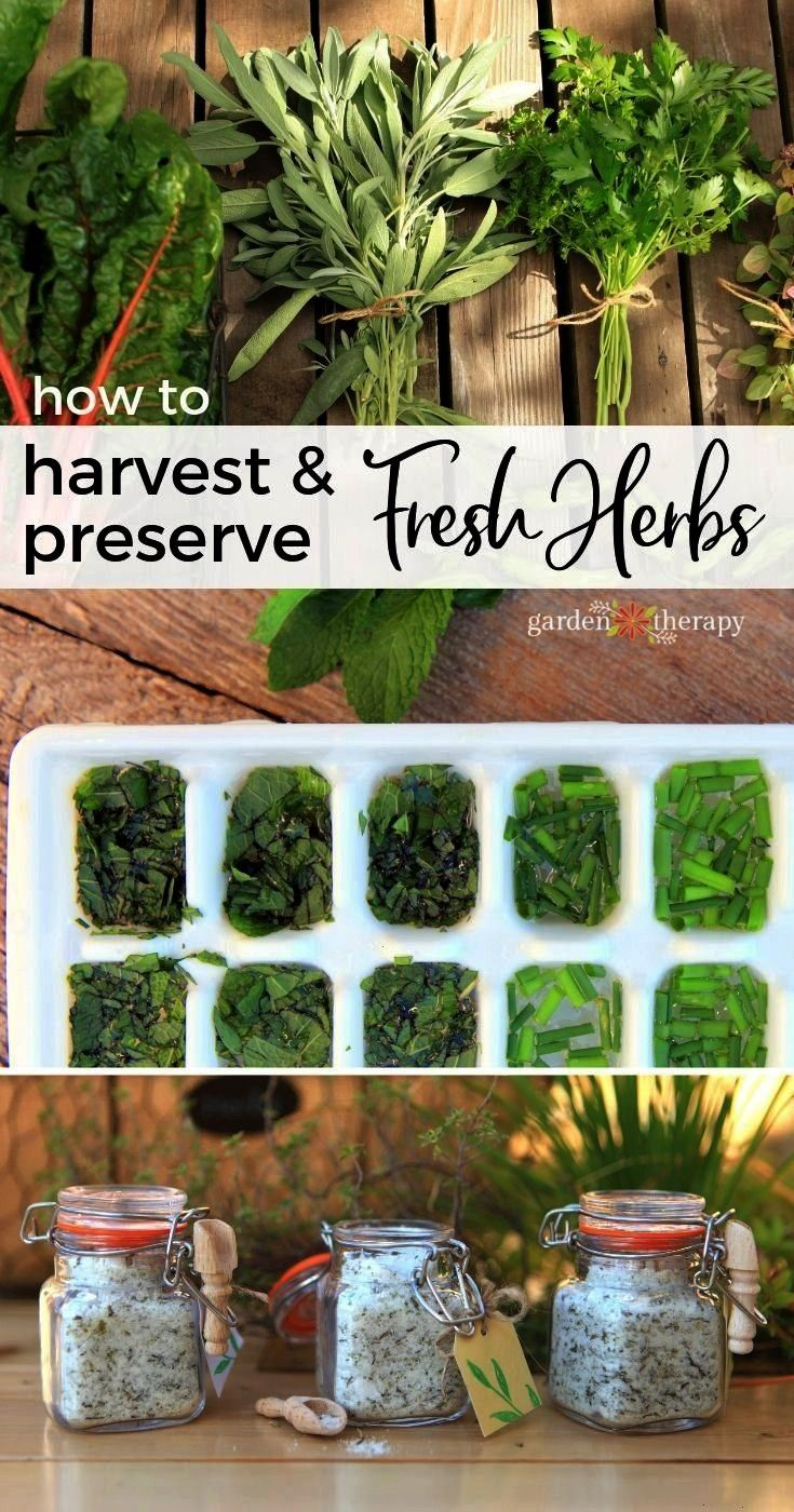 Harvest and Preserve Fresh HerbsfreshHow to Harvest and Preserve Fresh Herbsfresh Extend your vegetable garden into fall and you will be rewarded with fresh harvests a li...