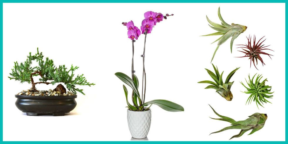 10 Gorgeous Plants You Can Buy On Amazon Right Now