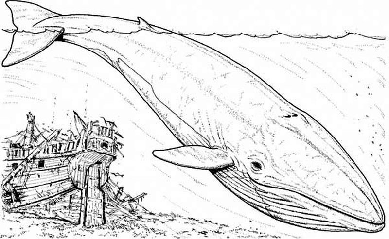 Free printable blue Whale coloring