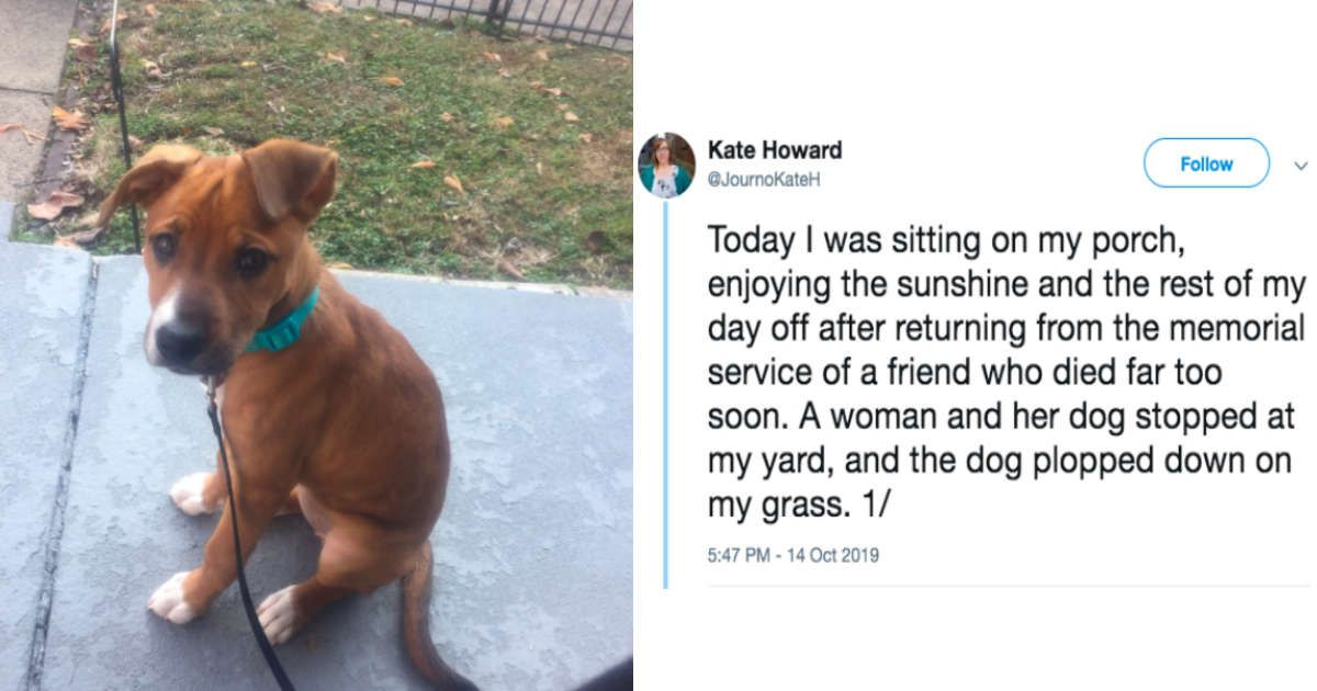 Strange Dog Shows Up On Woman's Lawn — And Seems To