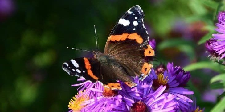 top plants to attract butterflies featured image | Plants ...