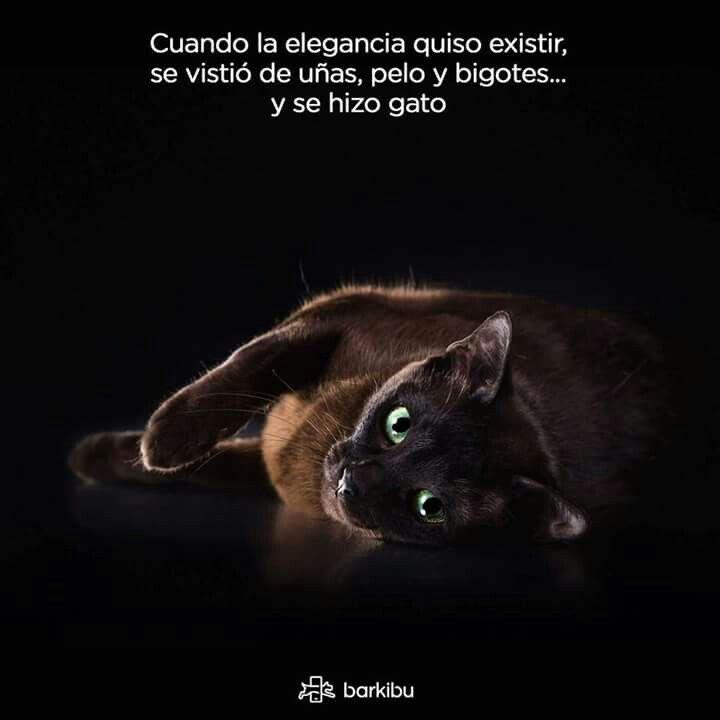 Por eso yo tengo 2 gatos.... ❤❤❤