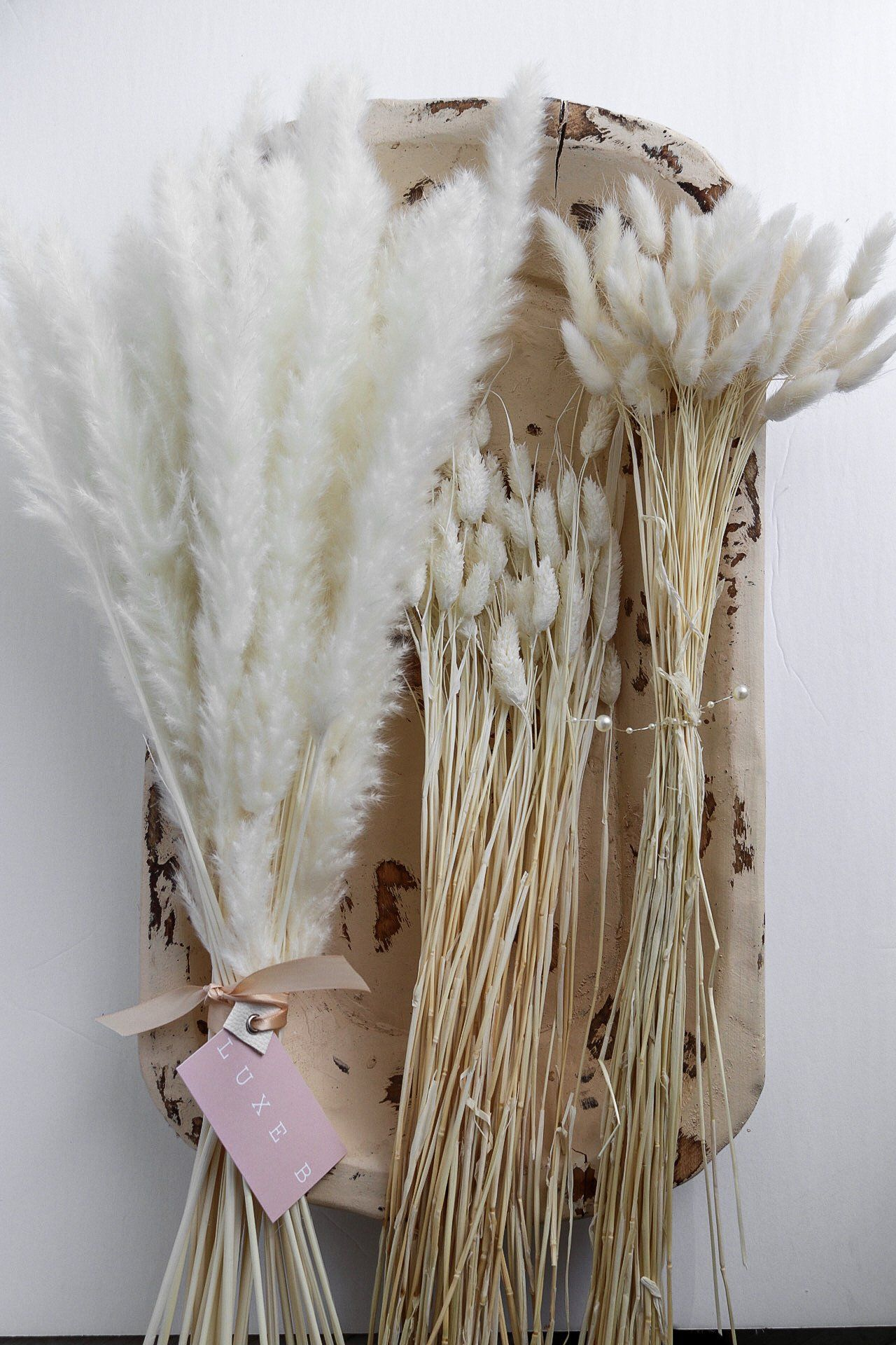 Bleach White Dried Floral Pampas Promo Pack
