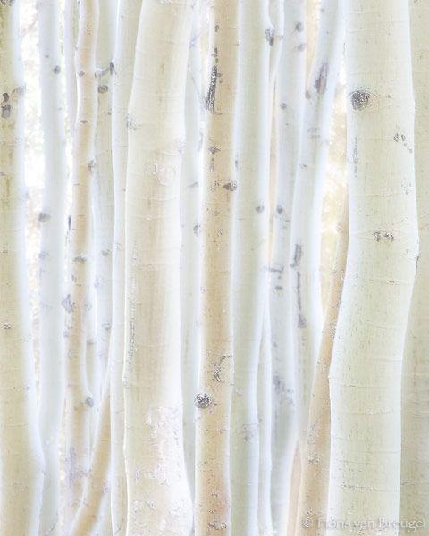 white, trees