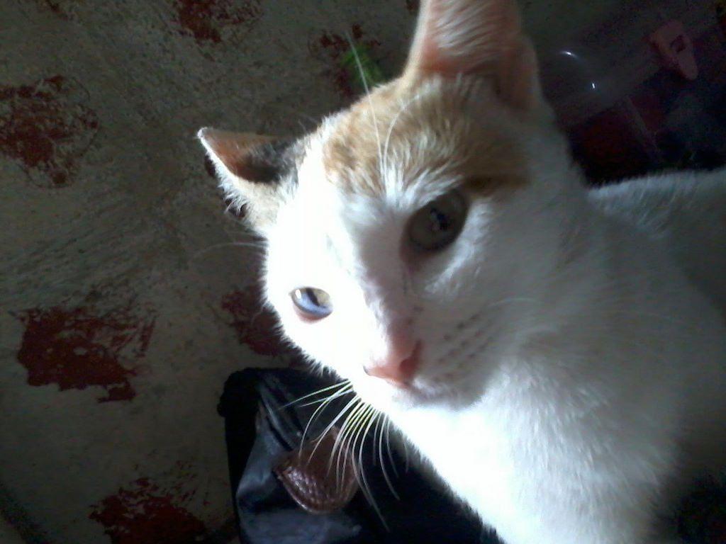 @armisticie https://t.co/Uu0ssE9202 | Cat pee, Cat spray, Cats