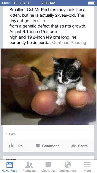 Who Has These Giant Hands Tiny Cats Cute Animals Kittens Cutest