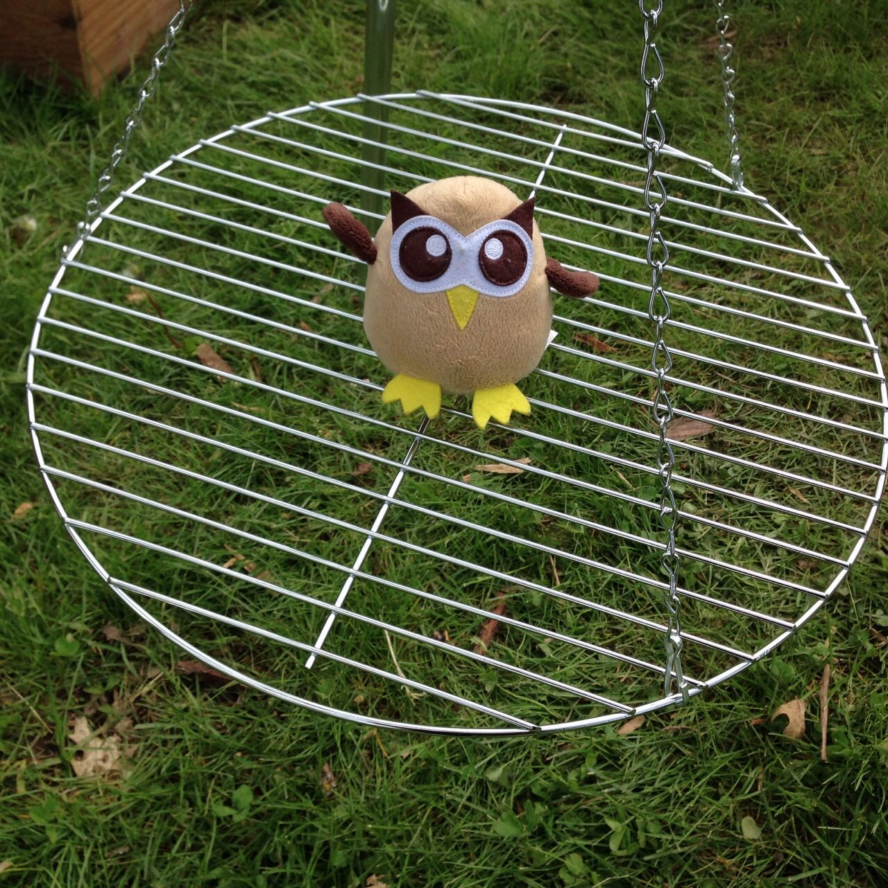 It's not a swing, Owly. Day 131 of ‪#‎yearofowly‬ ‪#‎lifeofowly‬