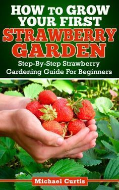 How to Grow Strawberries in Hanging Pots   WebNuggetz.com #growingstrawberriesincontainers
