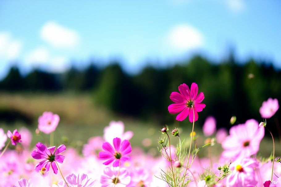 Color De Flores Naturaleza Flower Desktop Wallpaper Pink Flower Photos Free Pictures Of Flowers