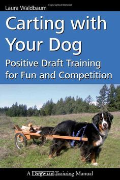 Amazon Com Carting With Your Dog Positive Draft Training For Fun