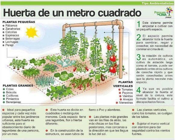 110 Ideas De Huerto Como Plantar Huerto Cultivo De Plantas Jardineria Y Plantas