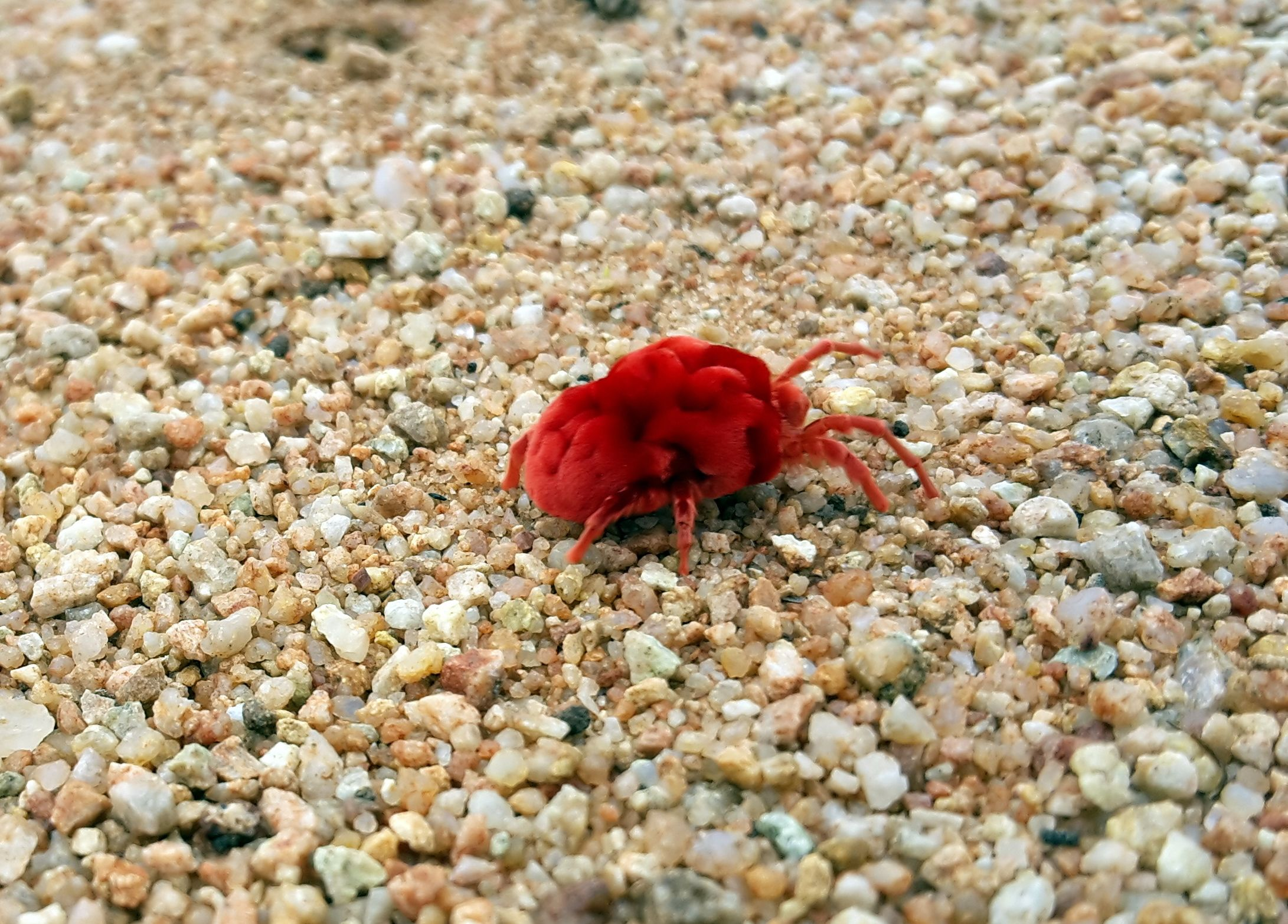 How To Get Rid of Chiggers | Porch, Clover mites, Eye worm