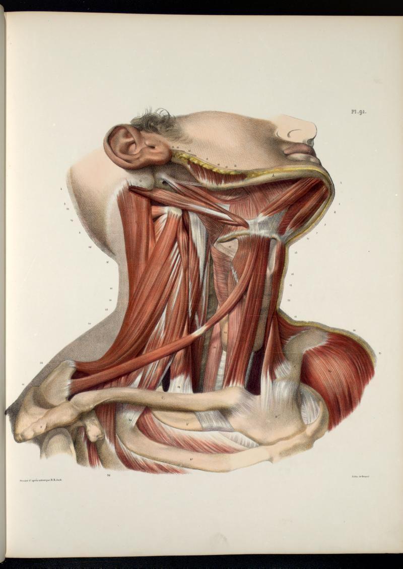 Anatomia Collection - UofT Libraries - Plate Description | cuerpo ...
