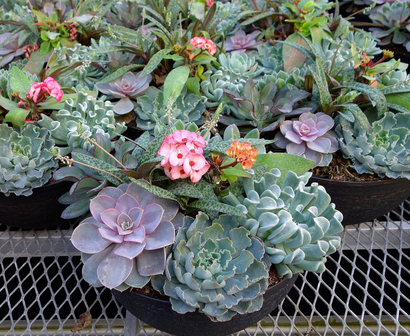 Beautiful Succulent Garden Made Bowls Are Available At Your Florida Home Depot Center Inspiration Pinterest Gardening