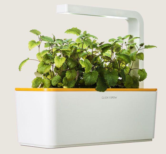 Grow Herbs With Zero Effort