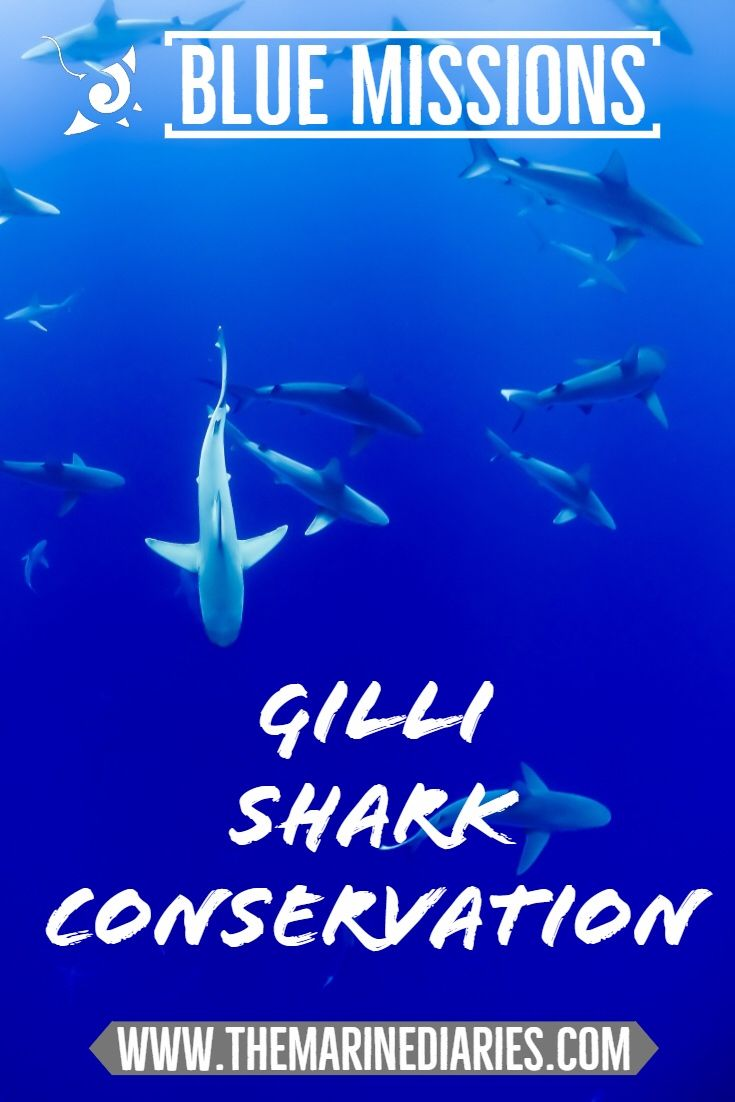 Love sharks or know somebody who does?   Make sure you check out our latest blog post where we interviewed The Gili Shark Conservation Project.   They are big shark lovers too and are raising awareness for sharks and other marine life around the Gili Islands, Indonesia.