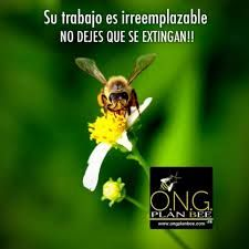 Resultado de imagen de ong salvemos a las abejas