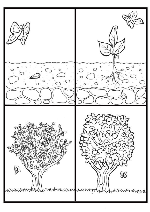 life cycle of apple tree coloring page Google Search Teaching