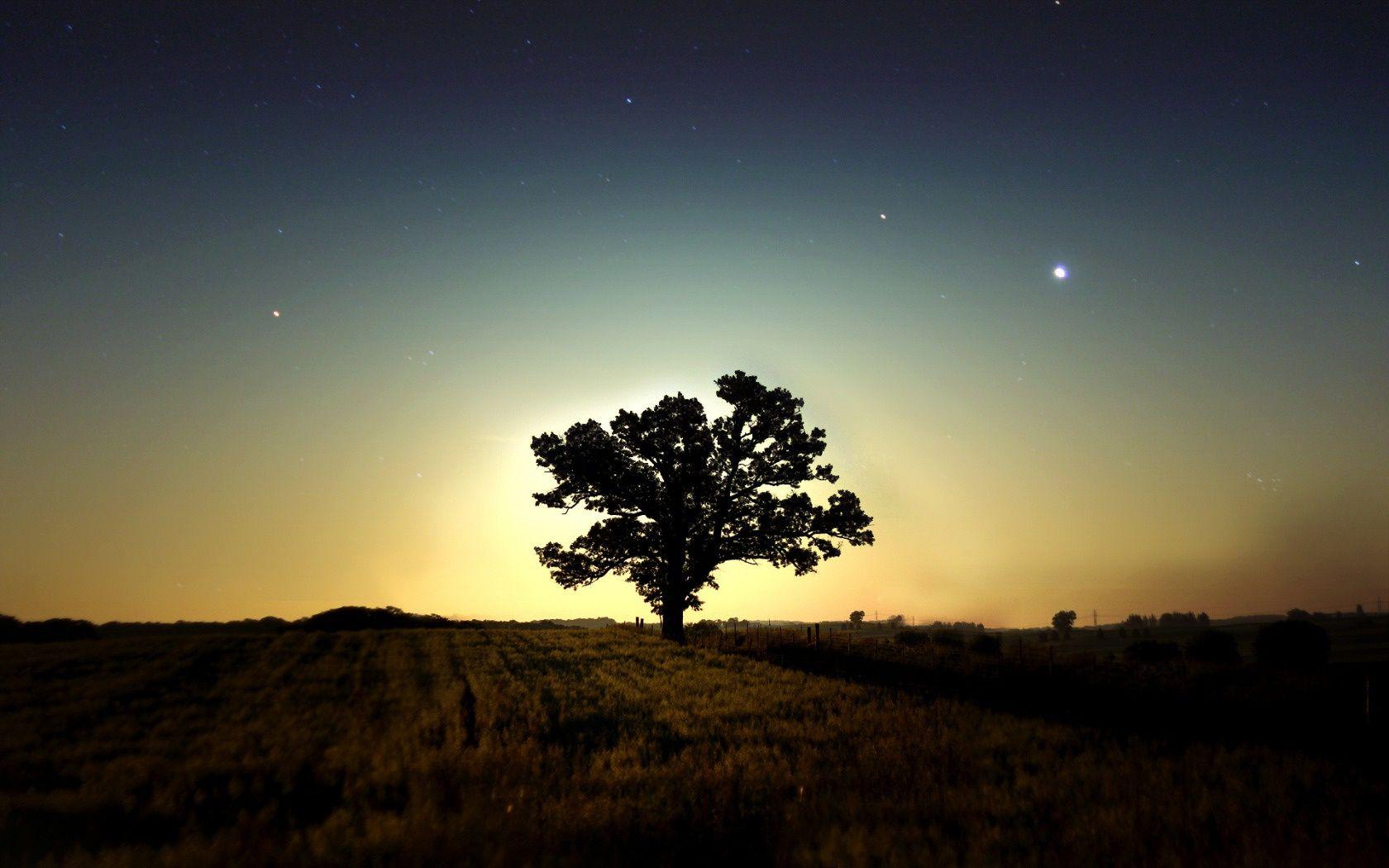 Tlcharger Fond D Ecran Arbre Nuit Star Sombre Fonds D Ecran Gratuits Pour Votre Rsolution Du Bureau 1680x1050 I Photos Paysage Image De Fond Fond Ecran
