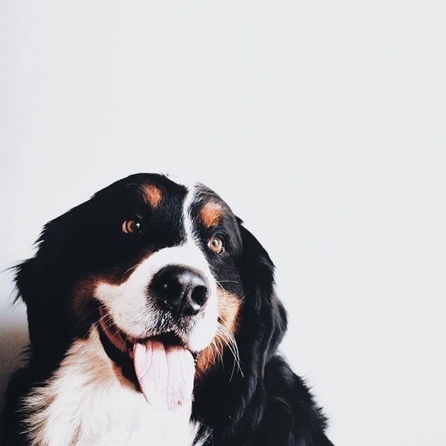 Pinterest Camila Tavonatti Dogs And Puppies Puppies Baby Dogs
