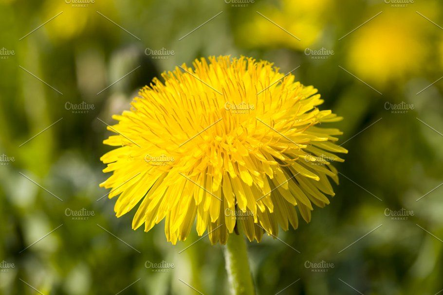 Pin On Flowers Photo