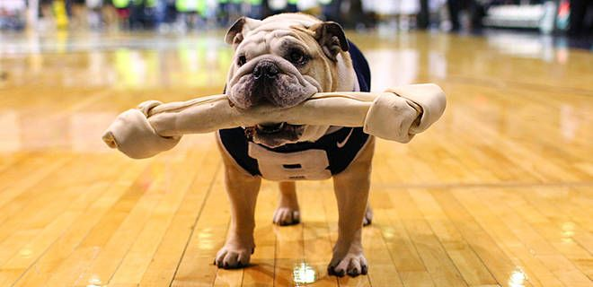 Butler S Mascot Has Pneumonia Feathers And Fur Pinterest