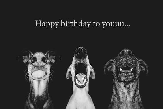 Dog Lover Birthday Wishes With Dog Picture