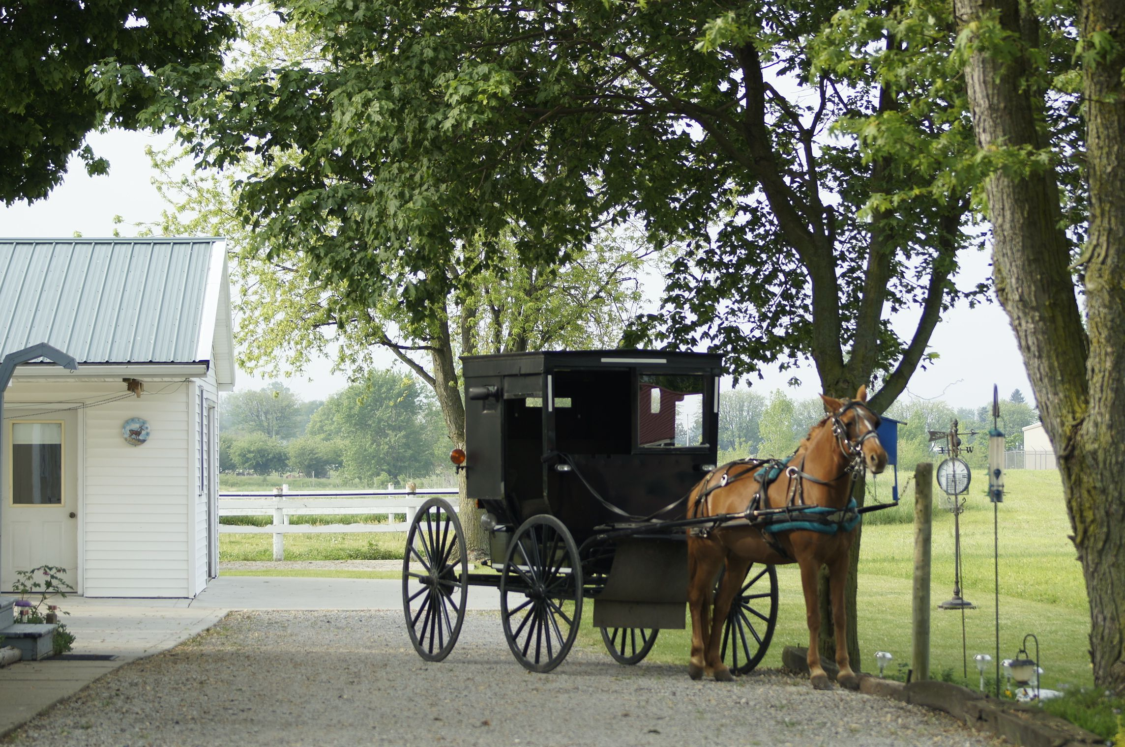 Amish buggy Shipshewana IN | Amish | Amish family, Amish