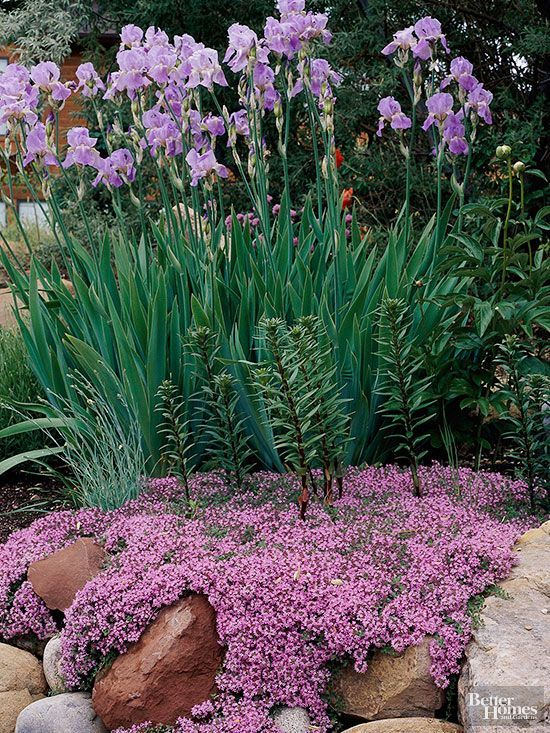 Best Plants for Rock Gardens Garden paths Plants and Gardens