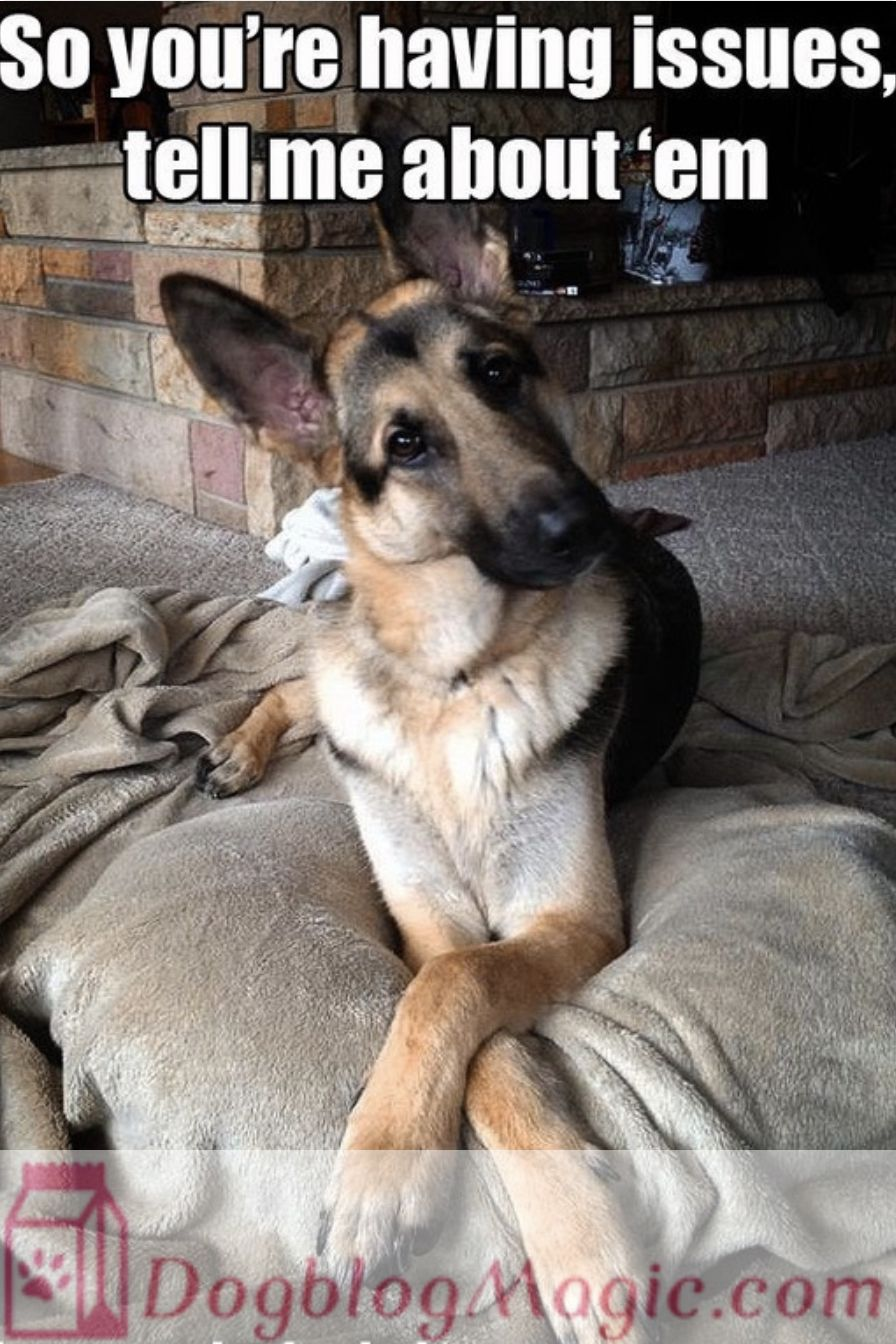 The Inspiring Reuniting Of Retired Veterans And Their Companion Service Dogs In 2020 German Shepherd Dogs Shepherd Dog German Shepherd Puppies