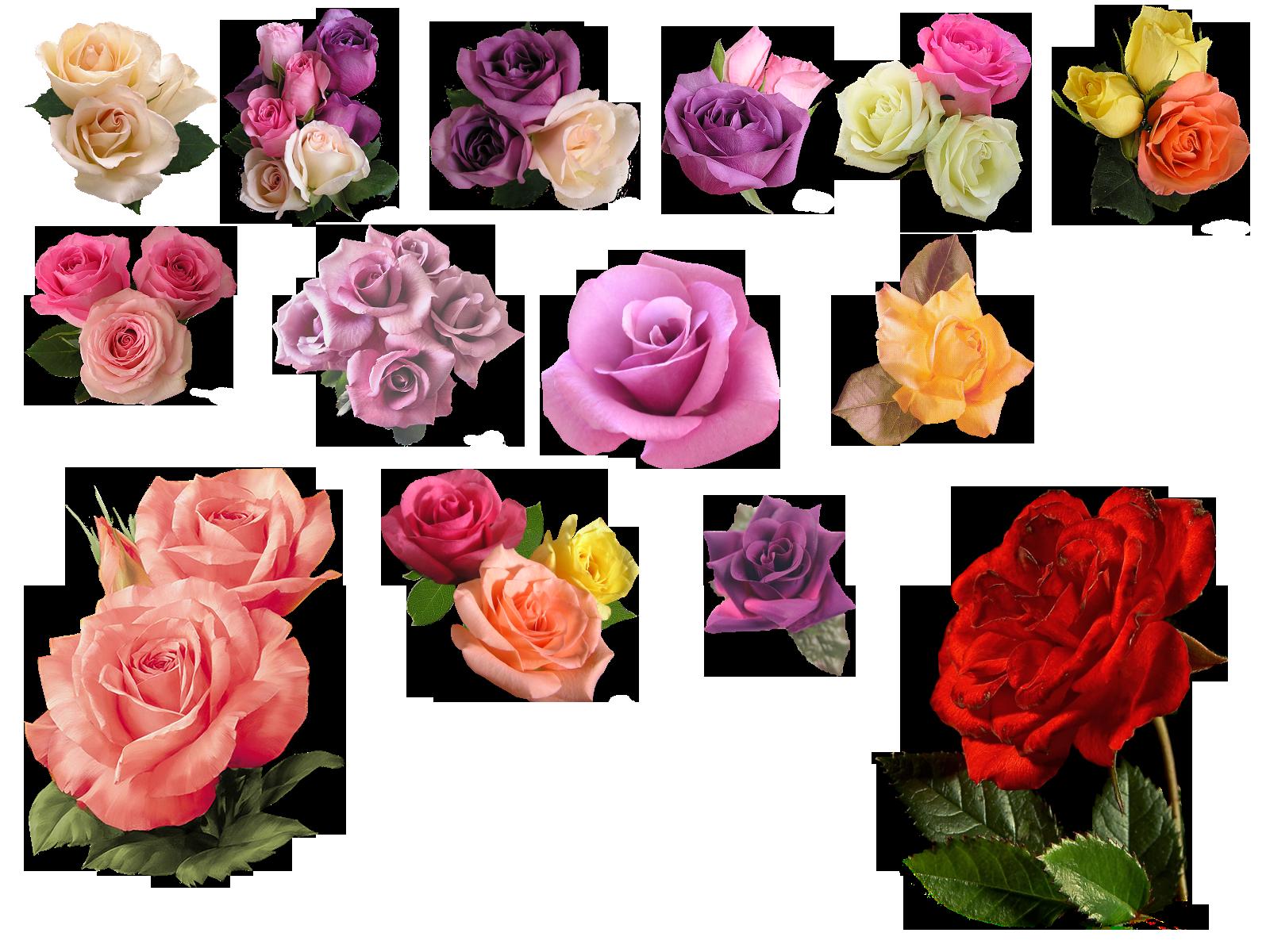 основном это псд исходники картинки розы повесившегося человека