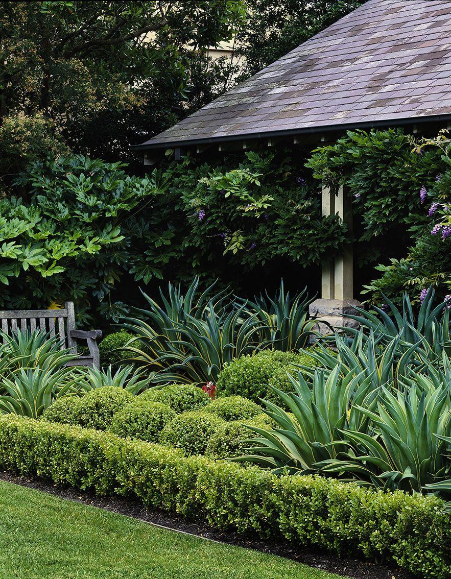 Buxus sp. & Agave sp. | Garden landscape design, Garden ...