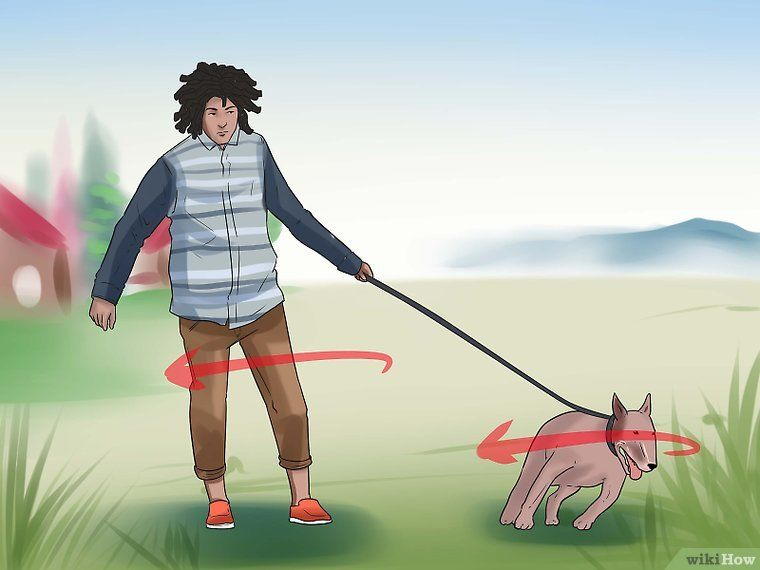 Train An Older Dog To Walk Calmly On A Leash Dogs Dog Walking