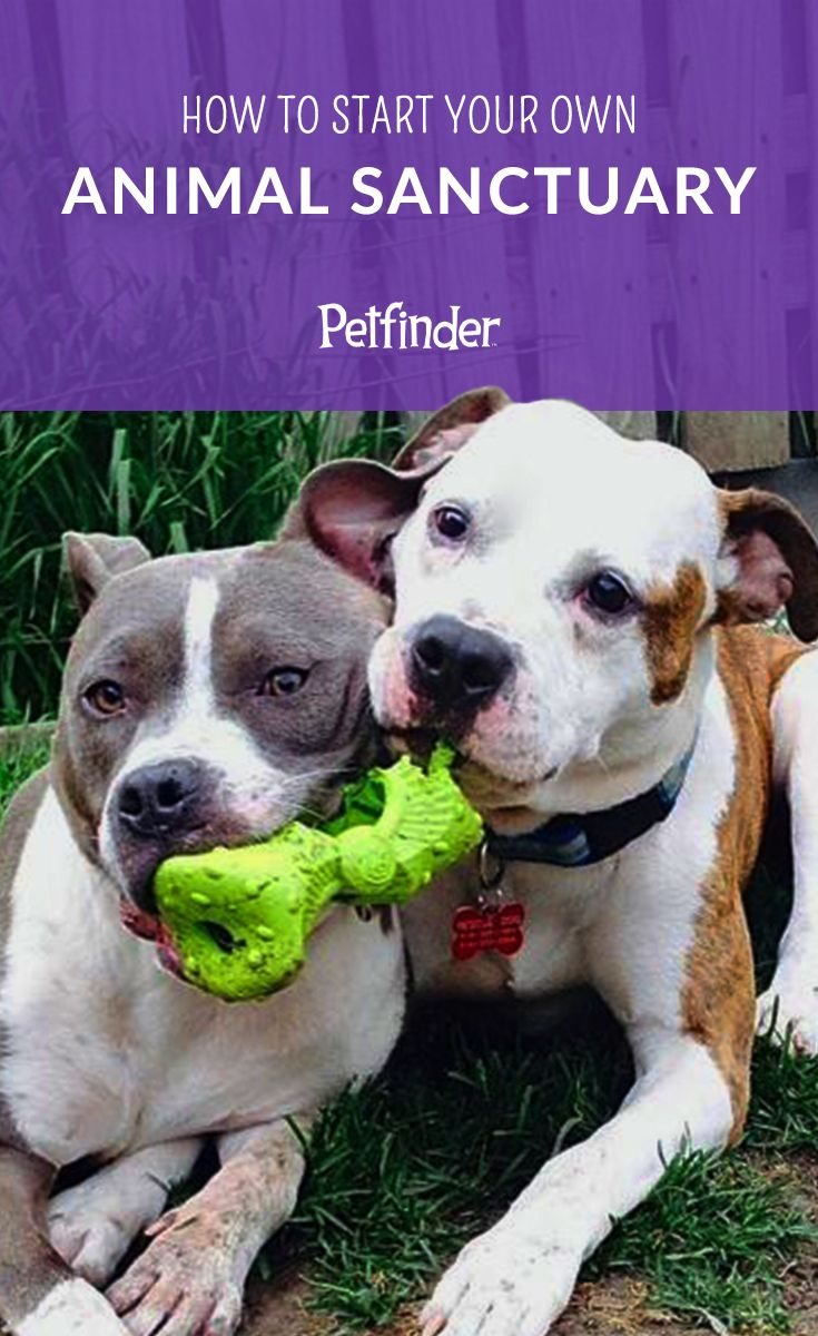 Interested in taking your passion for rescue pets to the next level? Petfinder has all the tips you need to start your own animal sanctuary. You never know, it could be your life's calling! #animalrescue