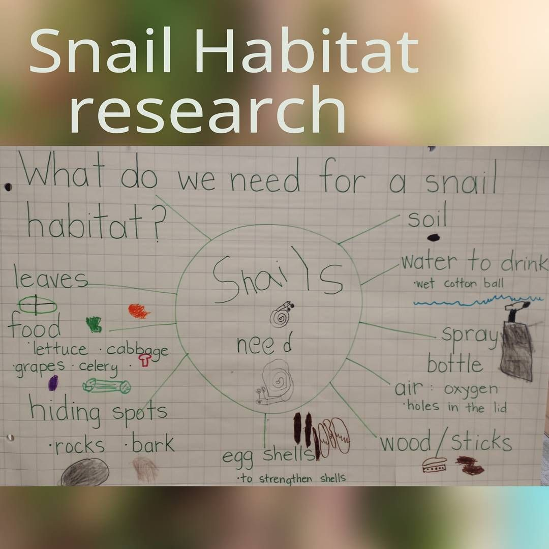 Pin By Beth Rushing On Kindergarten Snails